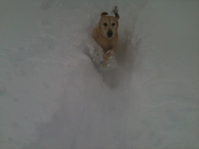 Abby Loves The Snow St. Thomas, Ontario Canada