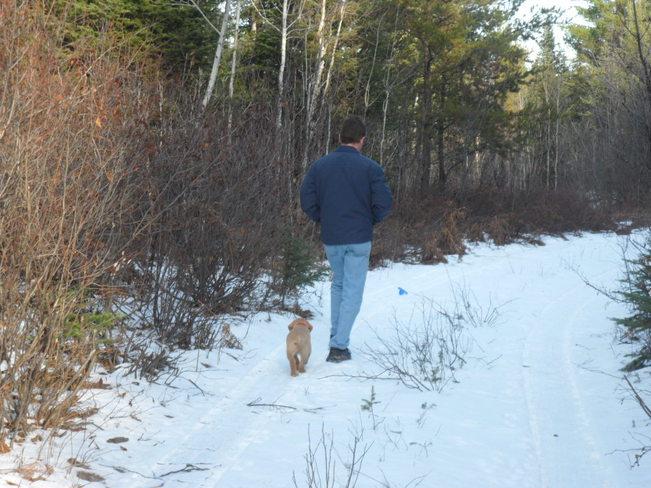 companion Kirkland Lake, Ontario Canada