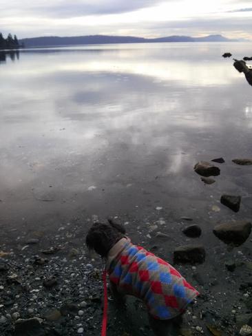 Our Sophie enjoying the beach this morning Gabriola, British Columbia Canada