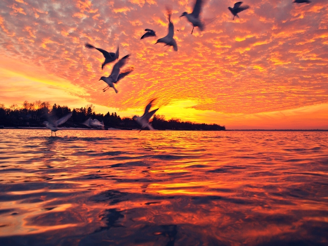 seagull sat Sarnia, Ontario Canada