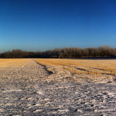 Calm winters day Sylvania, Saskatchewan Canada