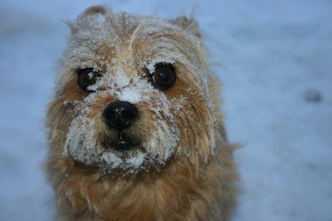 Abby loves the snow. Renfrew, Ontario Canada