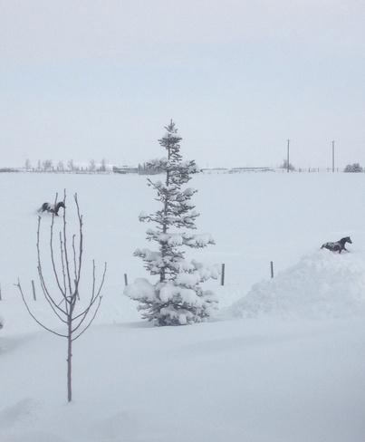 Winter in Pincher Creek Pincher Creek, Alberta Canada