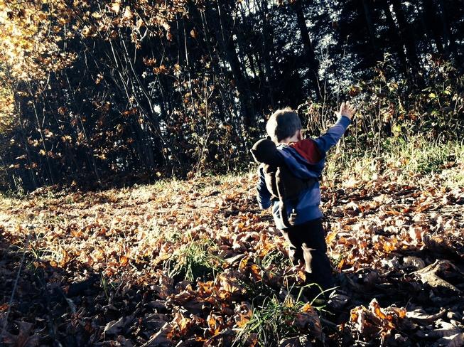 Enjoying the leaves Duncan, British Columbia Canada
