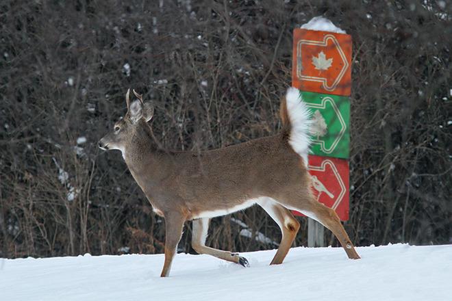 A Walk in the Park Ingleside, Ontario Canada