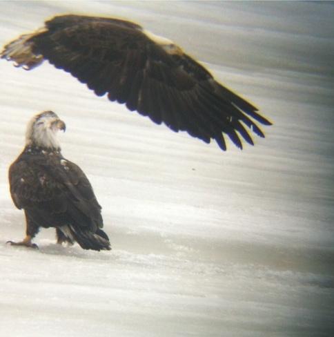 The Eagles have landed Rennie, Manitoba Canada