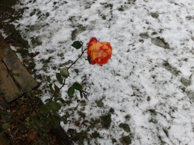 Snow Bloom Lambton Shores, Ontario Canada