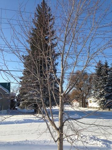 Sunny cold day Treherne, Manitoba Canada