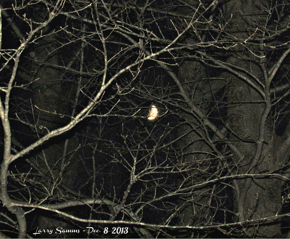 """Moon Through The Trees"" Springdale, Newfoundland and Labrador Canada"