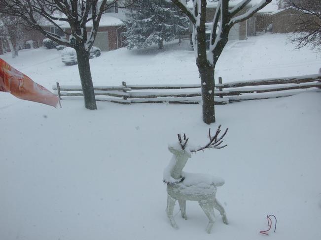 Heavy snow falling Hanover, Ontario Canada
