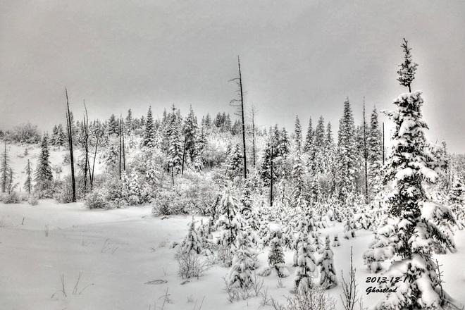 Snowy Thursday Swan Hills, Alberta Canada
