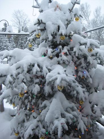 Snowy Christmas Fenelon Falls, Ontario Canada