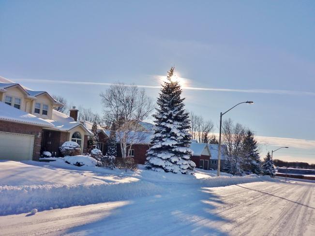 Sun Peaking around Xmas Tree Orillia, Ontario Canada