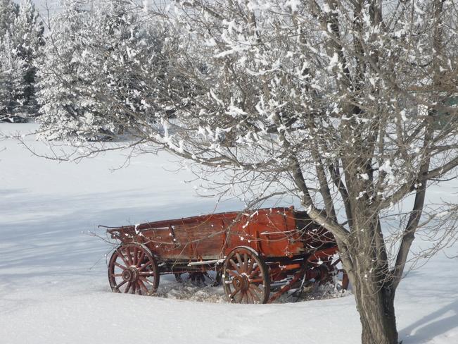 Red Wagon in the Snow Spruce Grove, Alberta Canada