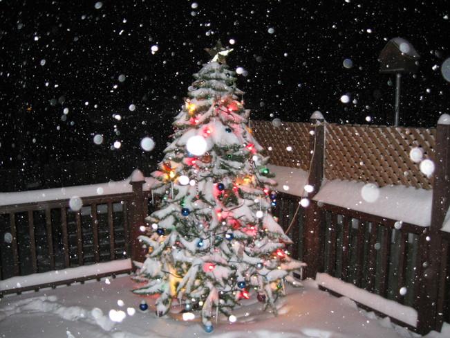 christmas tree on deck Simcoe, Ontario Canada