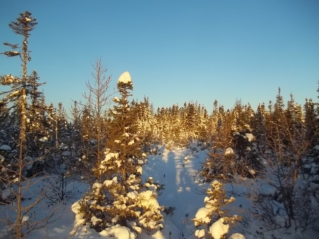 Morning Light Birchy Bay, Newfoundland and Labrador Canada
