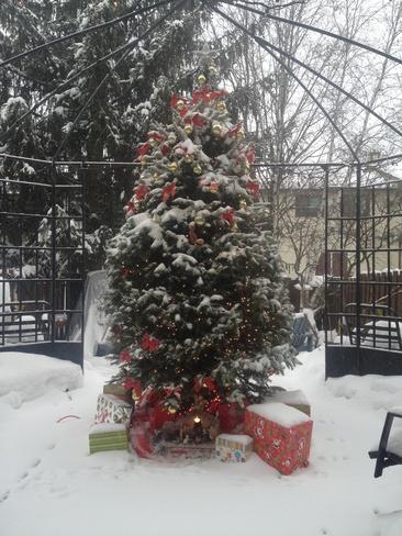 George's Tree Orleans, Ontario Canada
