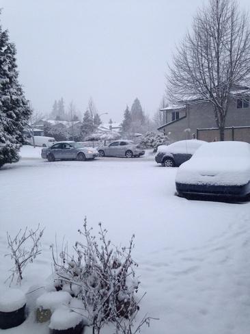 Wow! Surrey snowfall!!! Surrey, British Columbia Canada