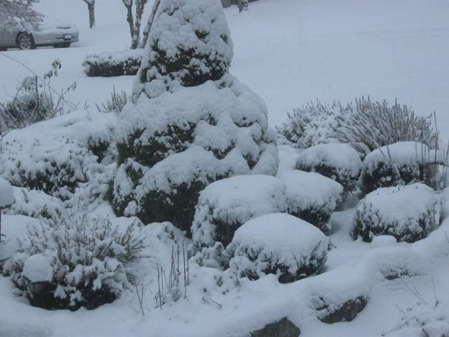 Where did my heather plants go? Surrey, British Columbia Canada