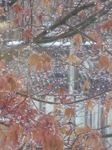 Frozen raindrops Mississauga, Ontario Canada