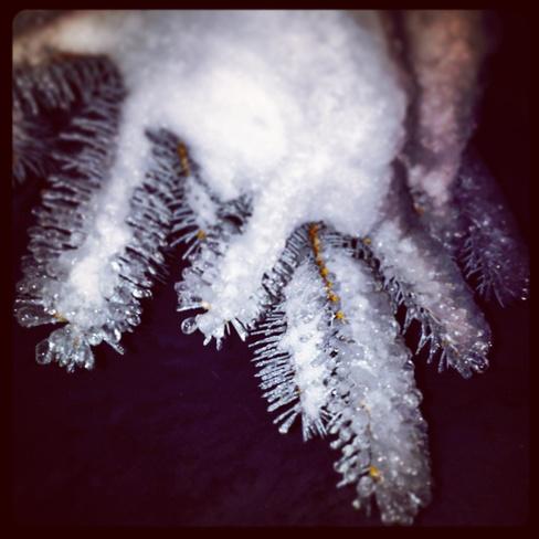 ice storm Brockville, Ontario Canada