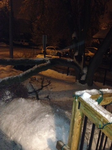ice storm2013 Brampton, Ontario Canada