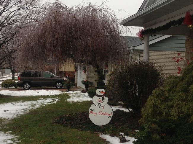 Icy Christmas Tree Aylmer, Ontario Canada