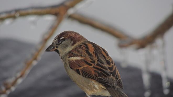 bird Kitchener, Ontario Canada