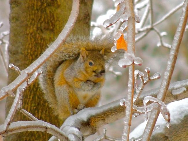 One Tough Squirrel Port Perry, Ontario Canada