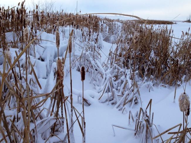 winters wonders Young, Saskatchewan Canada