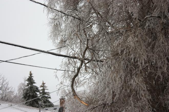 branch on a power line Ajax, Ontario Canada