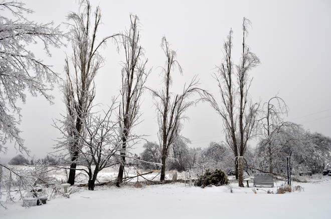 ice storm damage Georgetown, Ontario Canada