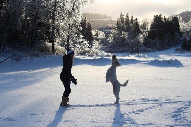 Dancing dog on the ice Saint John, New Brunswick Canada