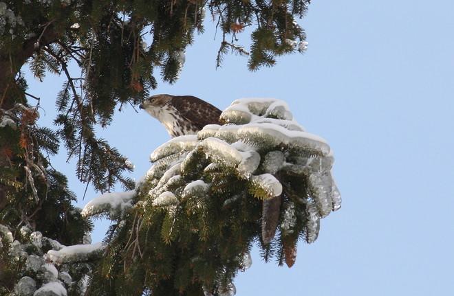 On the hunt Brighton, Ontario Canada