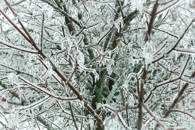 Ice Storm on Tree St. George, Ontario Canada