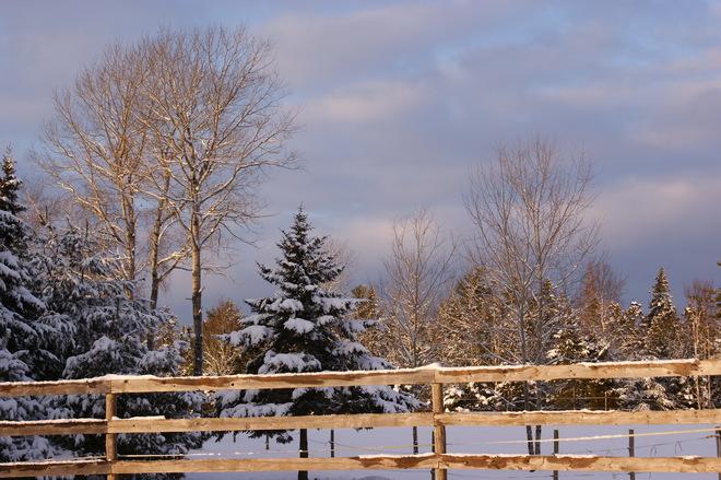 Winter Bliss Bridgewater, Nova Scotia Canada