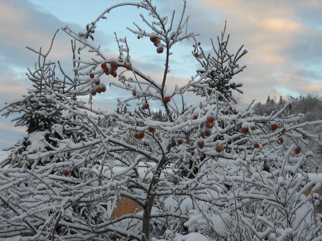 Iced Apples Saint John, New Brunswick Canada