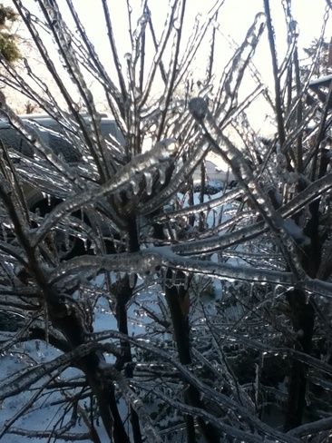 Aftermath of Toronto Ice Storm Agincourt North, Ontario Canada