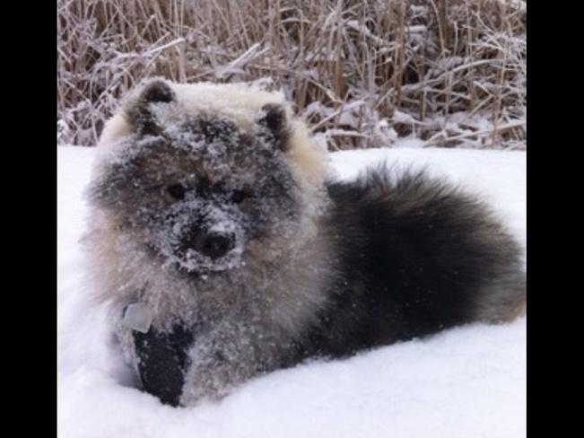 Dog,animals,furry ,pets, cats Winnipeg, Manitoba Canada