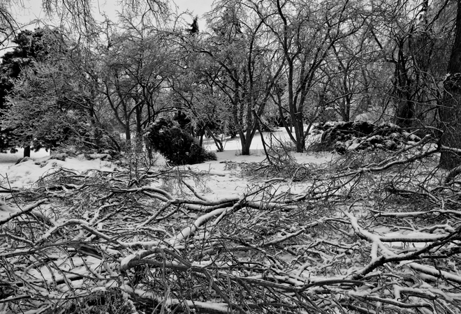 Broken Branches Scarborough, Ontario Canada