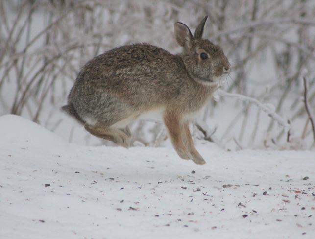 The Bunny Hop? Brockville, Ontario Canada