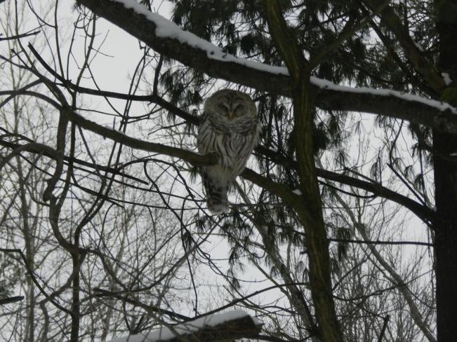 Owl Oro Station, Ontario Canada