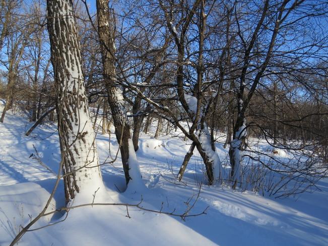 Freezing cold Winnipeg, Manitoba Canada