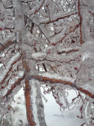 Ice Rain Brampton, Ontario Canada
