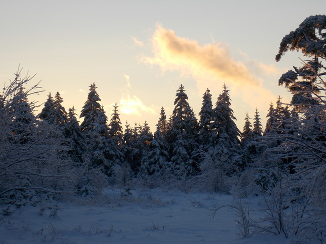 snow covered trees Lower Sackville, Nova Scotia Canada