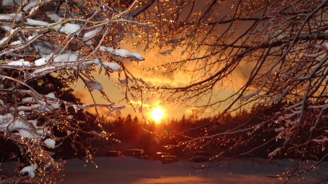 sunset through trees Saint John, New Brunswick Canada
