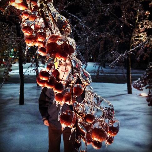 Iced Cherries Unionville, Ontario Canada