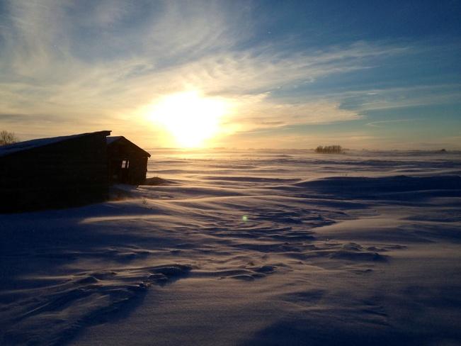 blowing snow Young, Saskatchewan Canada