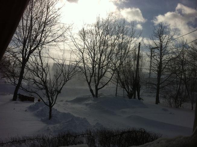 blowing snow Carbonear, Newfoundland and Labrador Canada