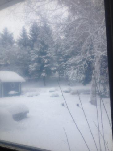 winter wonderland Loretto, Ontario Canada